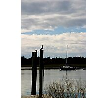 Squatters & Sailboat Photographic Print