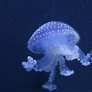 Blue Jellyfish by Karl R. Martin