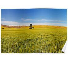 Walla Walla Wheat Field Poster