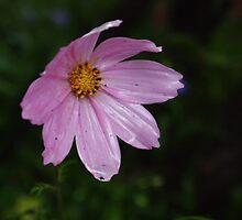 rain flowers - 4 by Dawn Dexter