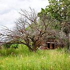 Dry Fork Homestead by Kim Barton