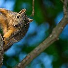 Peek-A-Boo around the tree by Ann Reece