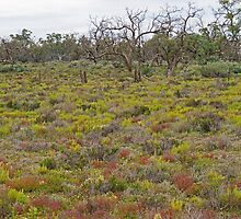 Colours of the Mallee by Harry Oldmeadow