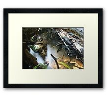 Forest Webs... Framed Print