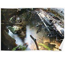 Forest Webs... Poster