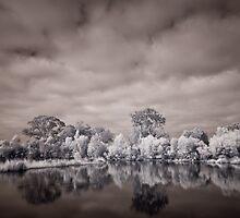 Wetlands by Craig Hender