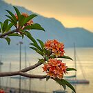 Madeira magic... by David Mould