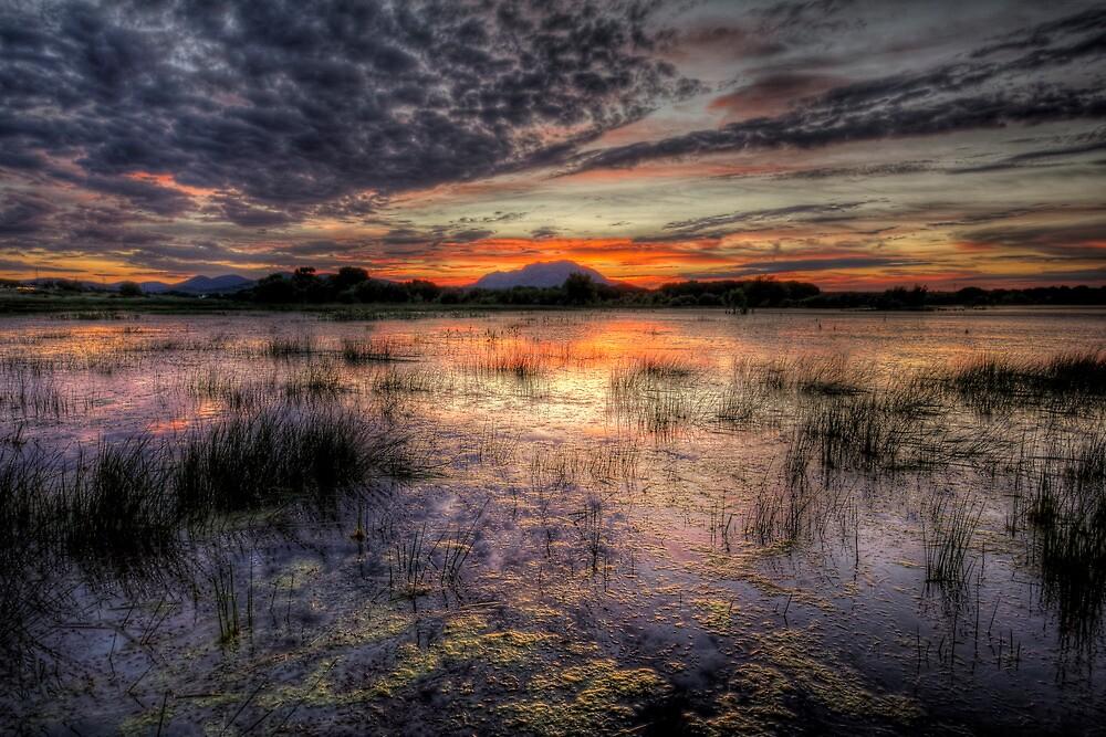 Wet by Bob Larson