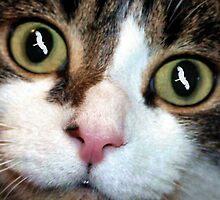Cats Eyes by John Dalkin