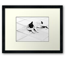 An error in judgement....or The not so Great Escape! Framed Print