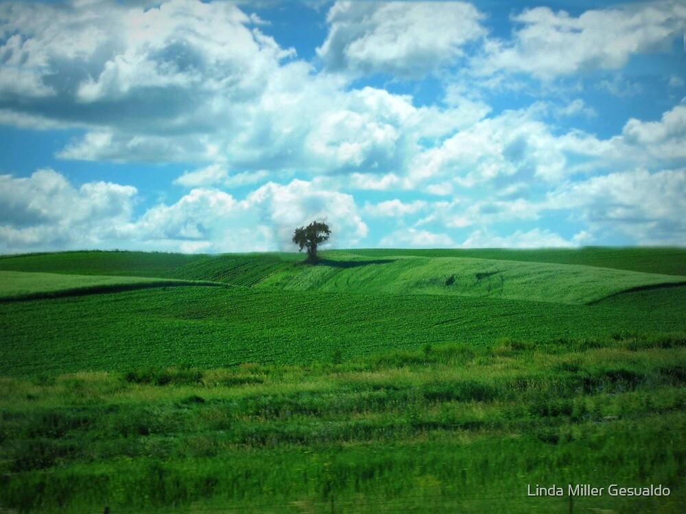 Green Fields by Linda Miller Gesualdo