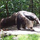 anteater by xxnatbxx