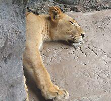 lion sleeping by xxnatbxx