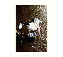 The Dancer - pelican on a perch Art Print