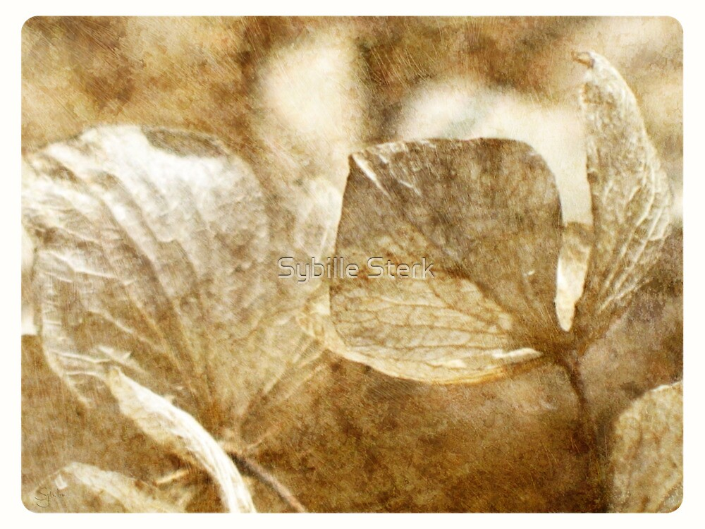 Faded by Sybille Sterk