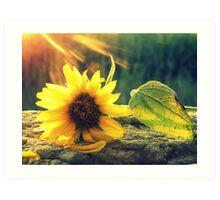 Sunflower' Art Print