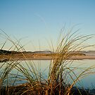 Wilson Inlet Mouth with reeds by pennyswork