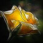 Extraordinary Rose by PaulaPixs