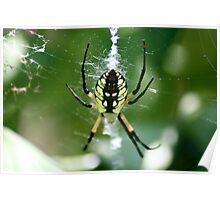 Spinning Garden Spider Poster