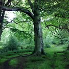 Three trees - Raincliffe Woods by Merice  Ewart-Marshall - LFA