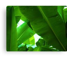 Big Green Giants Canvas Print