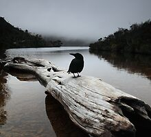 the blackjays log...... by David Murphy