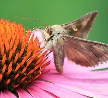 Moth  by DutchLumix