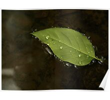 Leaf on water 1 Poster