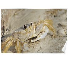 Ghost Crab, As Is Poster