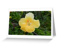 Yellow hibiscus flower Greeting Card