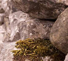 Moss and Lichen by Alastair
