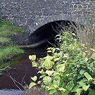 Quiet stream & Old Bridge-Port William by sarnia2