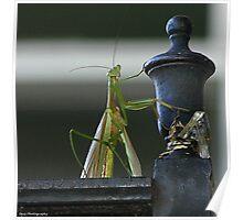 I am the mantis Poster