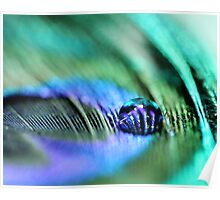 Peacock Feather and a Water Drop Poster