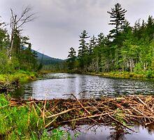 Adirondack Beaver Dam by Monte Morton