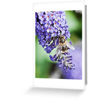 Wasp on Lilac tree Greeting Card