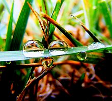 Morning Dew by Jorge Moyet