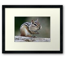 Innocent Until Proven Otherwise  Framed Print