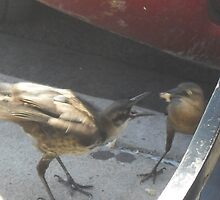 Grackle Mom Feeding Young by Navigator