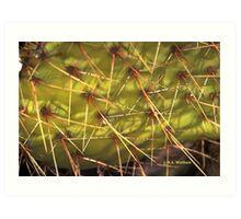 Cactus Needles Art Print