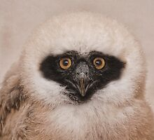 Eye Contact by Val Saxby