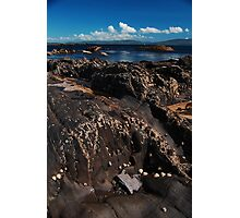 Tide Pool and Snails Photographic Print