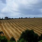 The field.. by eithnemythen