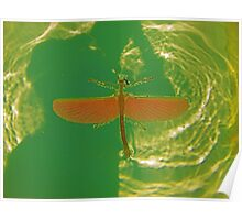 Greenfly! Poster