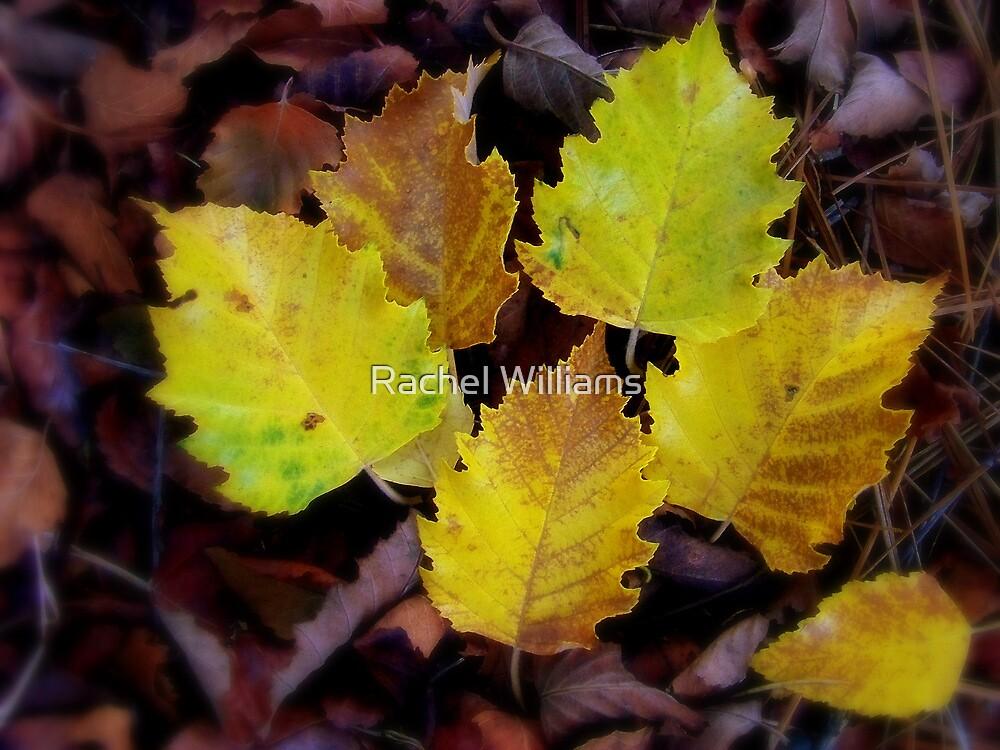 Lovely Leaves by Rachel Williams
