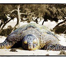 Honu Beach - Windward Oahu Sea Turtle by Ramon Vrielink