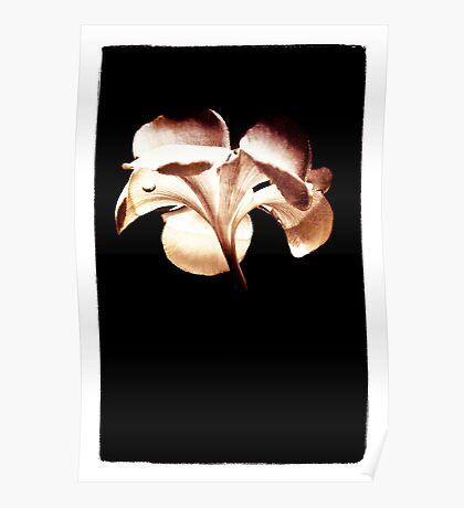 Plumeria Reflection Poster