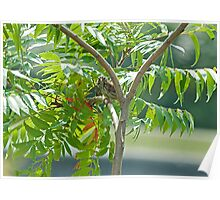 Summery Sparrow Sweetly Singing in the Sumac Poster