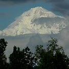 Mt.McKinley by Margaret  Shark