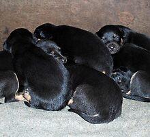 lotsa puppies by Juanita Arnold